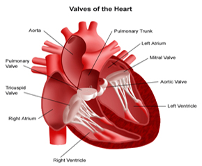 Heart Surgery  India, India Surgery Heart Transplant India, Best Price India Surgery Heart Transplant India